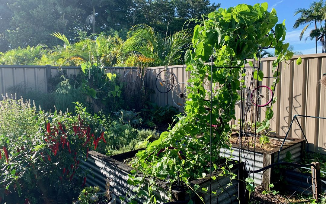 Vertical growing ideas for small gardens