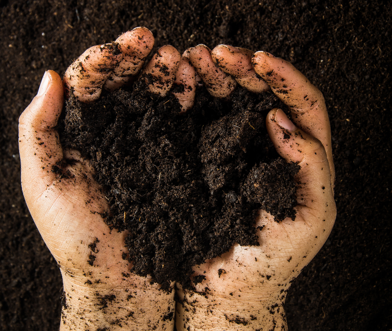 How to compost for waste free living