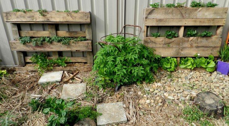 Beginnings of a pallet garden
