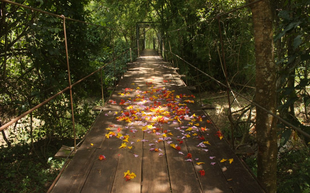 Add Permaculture to your toolbox – pathway to sustainability
